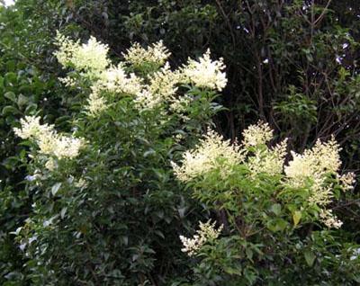 北ハイツの植栽