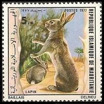 ヤルカンドノウサギ