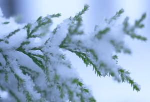 大雪注意報発表中