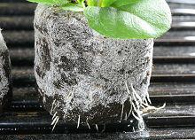 ガーベラを定植しました