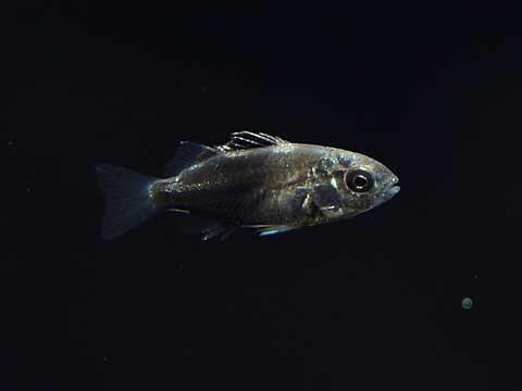 あつもり7月魚