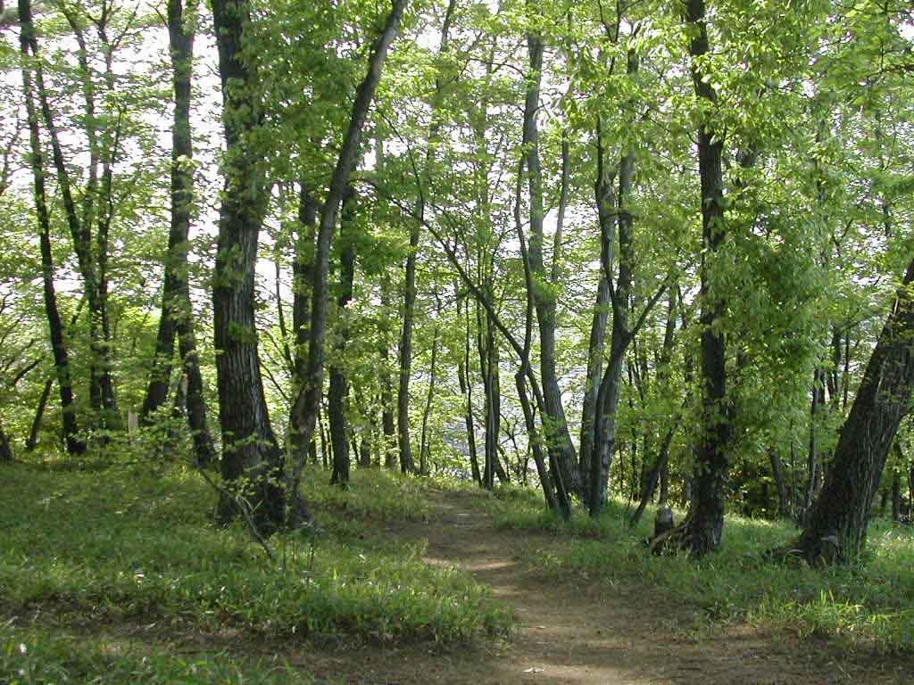 壁紙ライブラリー・新緑の雑木林