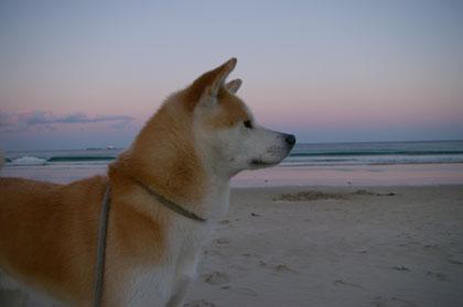 海を見て何を思うか