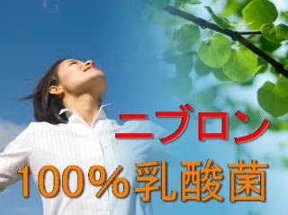 100%乳酸菌ニブロンの購入サイト