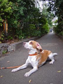 高円寺の路地裏
