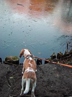 池が凍ってる