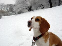 鼻の頭に雪が