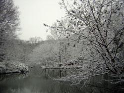 雪でキレイだね