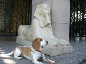 エジプト大使館