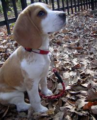 落ち葉の上の散歩