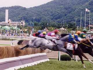 障害(ジャンプ)レースのABC