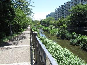 いたち川遊歩道