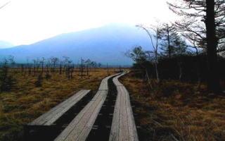 faff407d45 下山して本日の温泉地、日光湯元温泉に向かう。そこへ行くには戦場ヶ原を通らねばならぬ。湿原に木道がしっかりひかれ、湿原植物が腰のあたりまで延々と続く。