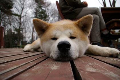 疲れたワン